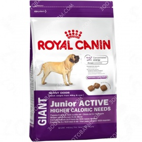Royal Canin (���� �����) Giant Junior Active
